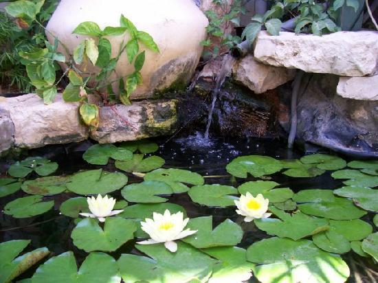Dekel Guesthouse - Ramat Gan: fish pool
