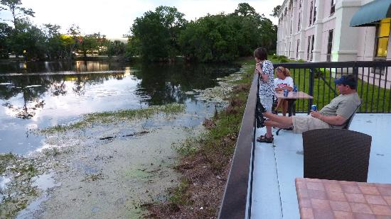 Hampton Inn Bonita Springs / Naples North: Gator-Viewing