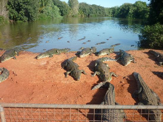 โบรม, ออสเตรเลีย: Malcolm Douglas Wildlife Santuary