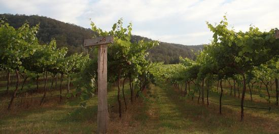 Cedar Creek Cottages: Semillon Vineyard