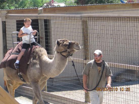 Kalahari Resorts & Conventions: Camel Ride at the Safari Zoo