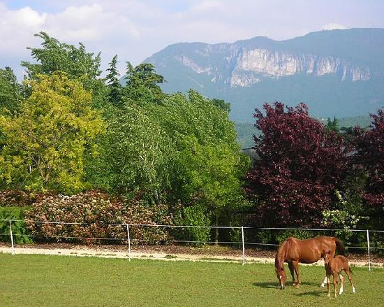 Agriturismo Relais Cà del Baldo: Horses at Ca' del Baldo.