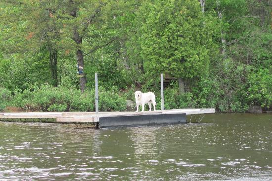Ely, MN: Daisy at the dock as we head out to fish