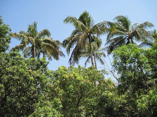 Ecomantra's Rivertrail Eco Camp : Beautiful surroundings