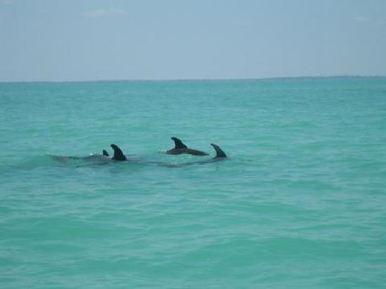 Playa del Carmen, Mexico: ils sont beaux!