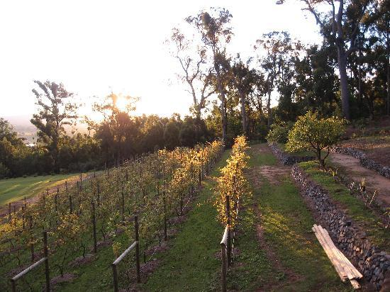 Wallaby Ridge Retreat: Take a walk through the vineyard