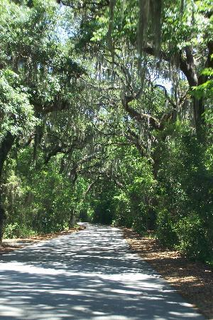 Fernandina Beach, Flórida: Canopy of trees throughout the park