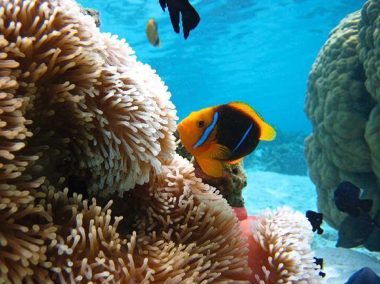 Underwater attractions