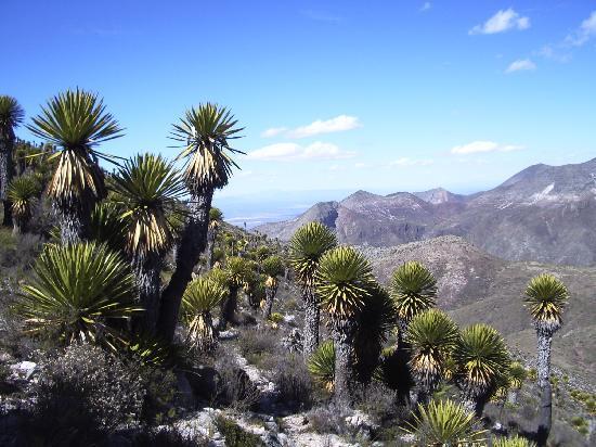 Real de Catorce, Mexico: El Quemado, belle ballade sur la montagne sacrée des indiens Huichol