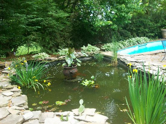 Stirling Guest Hotel: Fish Pond and the Pool
