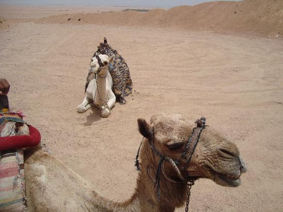 Nabq Bay, Egipto: chillaxing!
