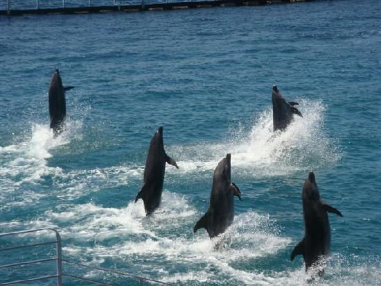 Ocean Adventure : dolphins walking on water