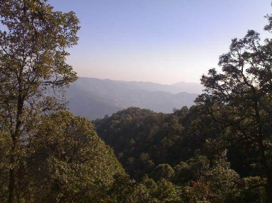 Binsar, Ινδία: Bird Mountains