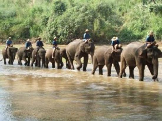 Pachyderm Salvation – Baan Suan Chang Elephant Camp