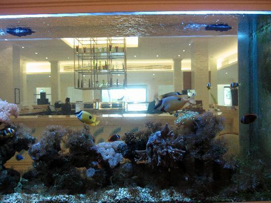 l hotel picture of jw marriott khao lak resort spa khao lak tripadvisor