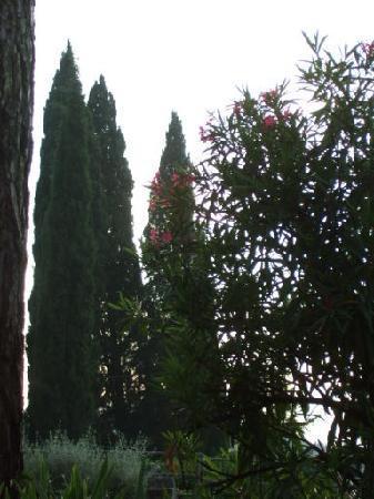 Villa dei Bosconi: 糸杉
