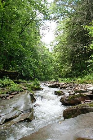 Forksville, Pensilvania: Creek near Morgan Century Farm