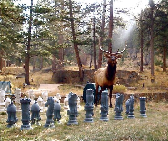 Romantic RiverSong Bed and Breakfast Inn: Our chess playing bull elk
