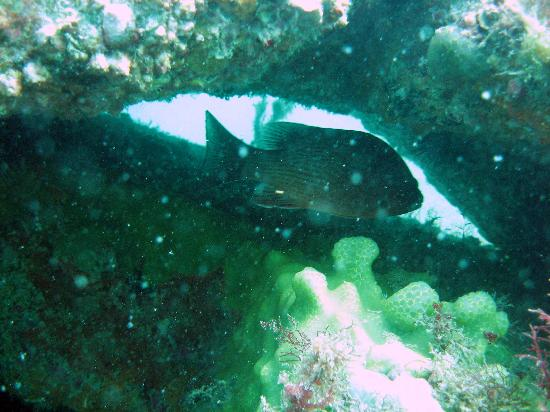 Florida Underwater Sports: Fish hanging out in artificial reef