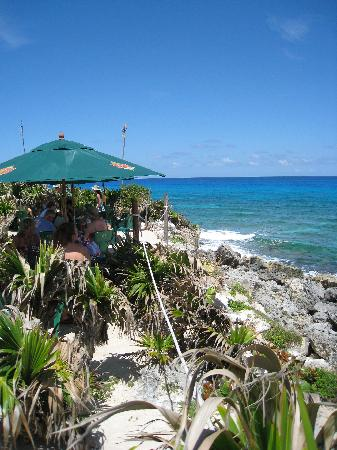 Coconuts Bar and Grill: view