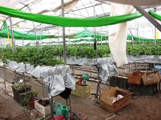 Shimaya Ryokan: Strawberry Garden