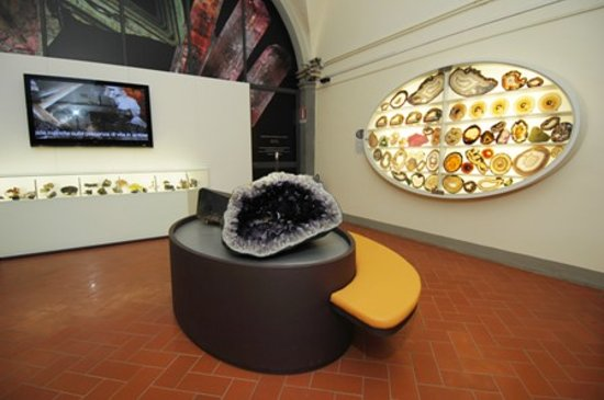 University of Florence Natural History Museum : Museo Di Storia Naturale