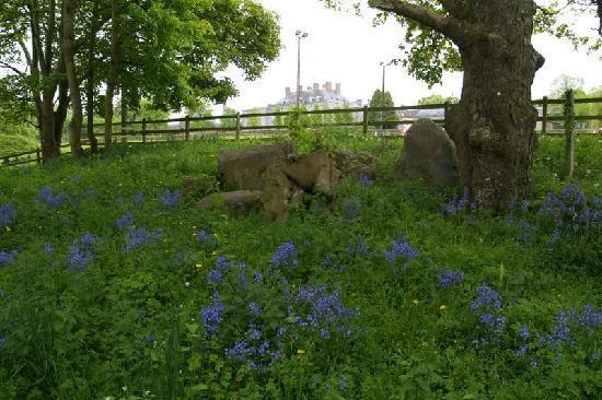 Castle Durrow: Garden 3