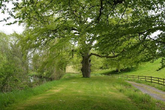 Castle Durrow: gardens 4