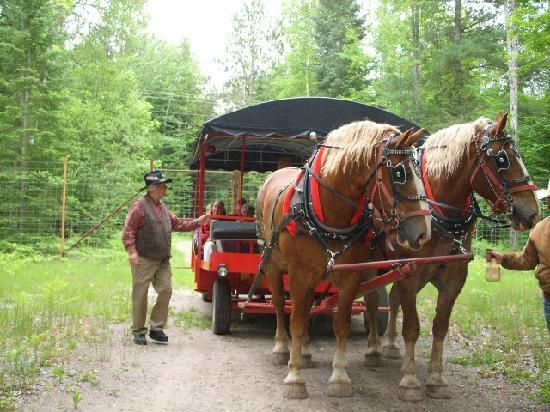 Thunder Bay Resort: Hour ride to view elk on carriage.