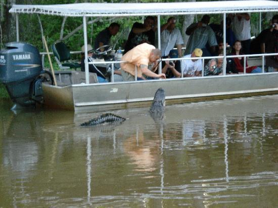 Slidell, Louisiane : Feeding the Alligator