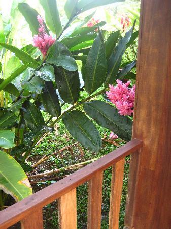Hotel Rancho Cerro Azul: Flowers surrounding Cabin Deck