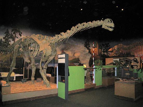 George S. Eccles Dinosaur Park: Museum Display