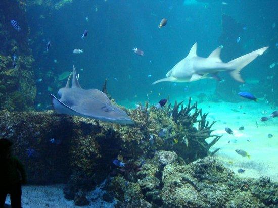 sydney aquarium photo de sea sydney aquarium sydney tripadvisor