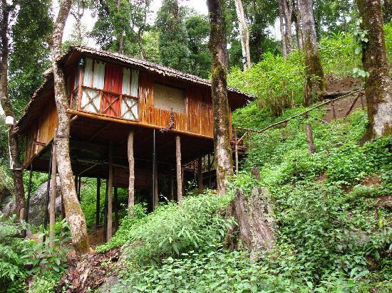 Vythiri, India: Tree top house