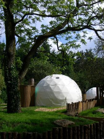 Dome Garden: The Big tree