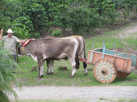 Don Juan Tours : Ox Cart