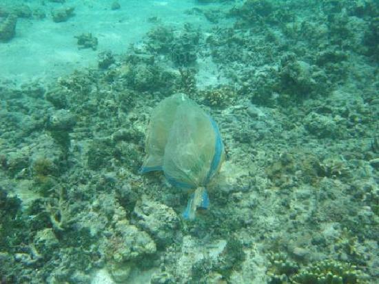 Maratua Atoll, Indonesia: Wer will hier schnorcheln?