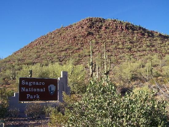 saguaro picture of red hills visitor center tucson tripadvisor. Black Bedroom Furniture Sets. Home Design Ideas