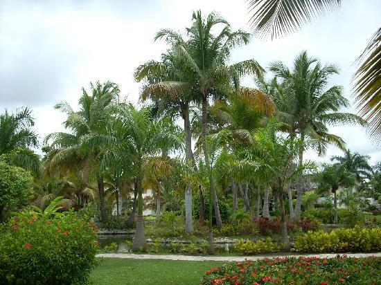Landscape - Catalonia Royal Bavaro: ;