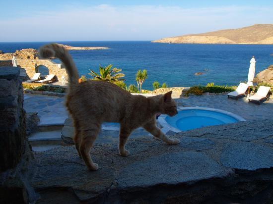Agios Sostis, اليونان: La mascotte