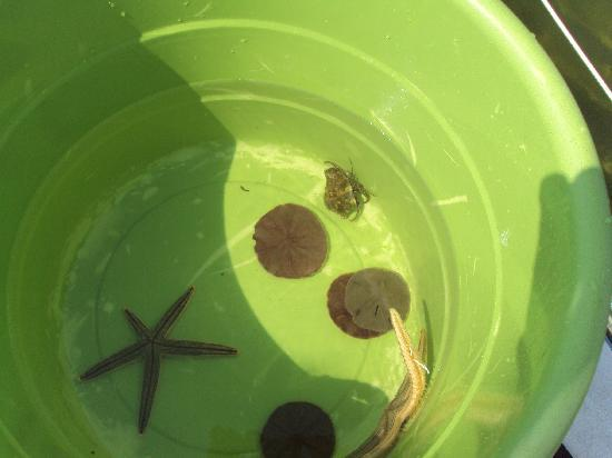 Island Time Sailing: Some of the things the kids found snorkling