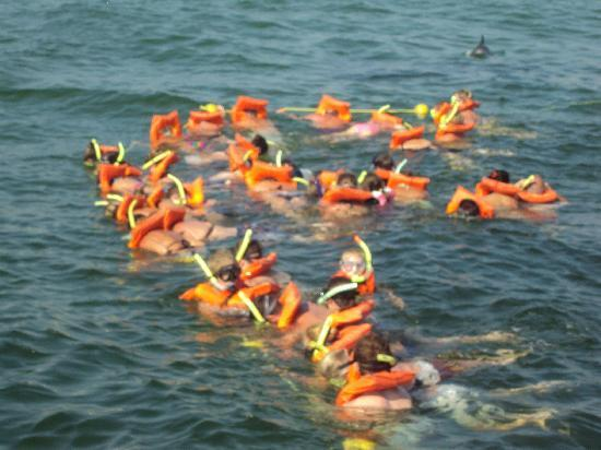 Island Time Sailing: Dolphins await..