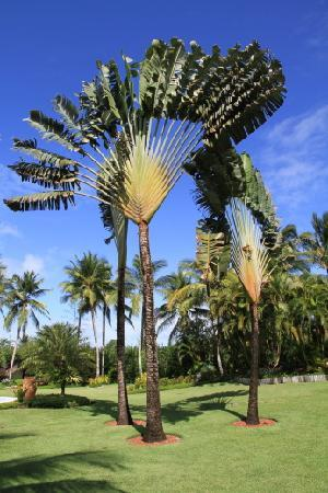 Villas de Trancoso Hotel: Garden of the Villas