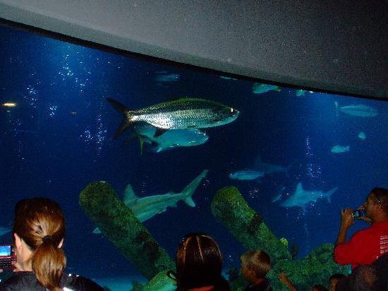 ... Aquarium - Picture of ABQ BioPark Aquarium, Albuquerque - TripAdvisor