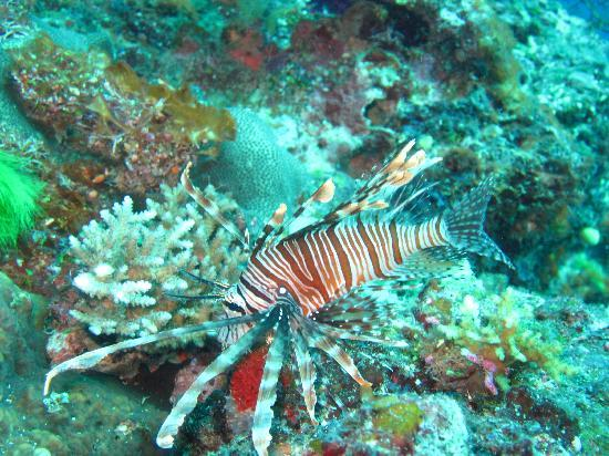 La Dolce Vita Holiday Villas: Diving with KoroSun Dive