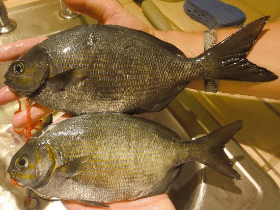 Top Shot Spearfishing : mmmm... dinner!