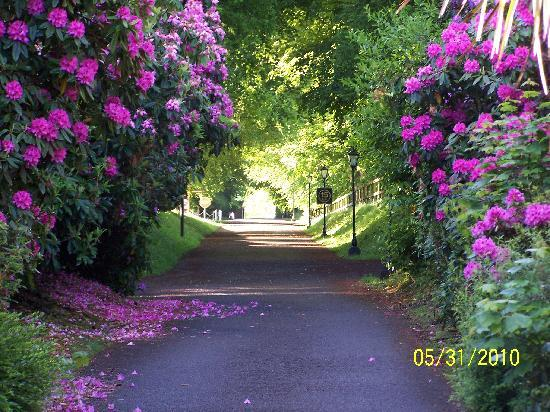 Waterford Castle Hotel & Golf Resort: The lane to the car park