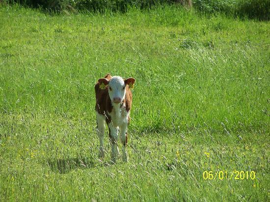 A Bayly Farm resident