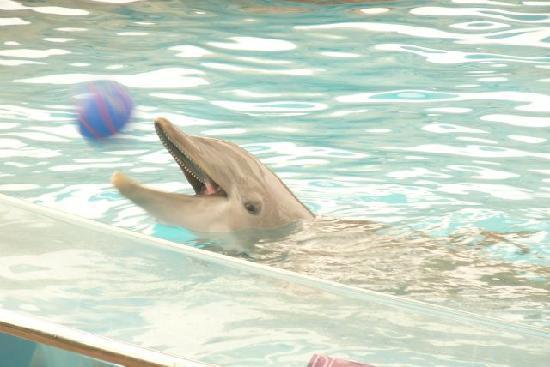 Hampton Inn & Suites Rockport - Fulton: Texas State Aquarium