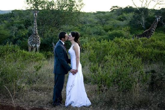 Zululand Tree Lodge: Impromptu wedding guests - the Giraffe!